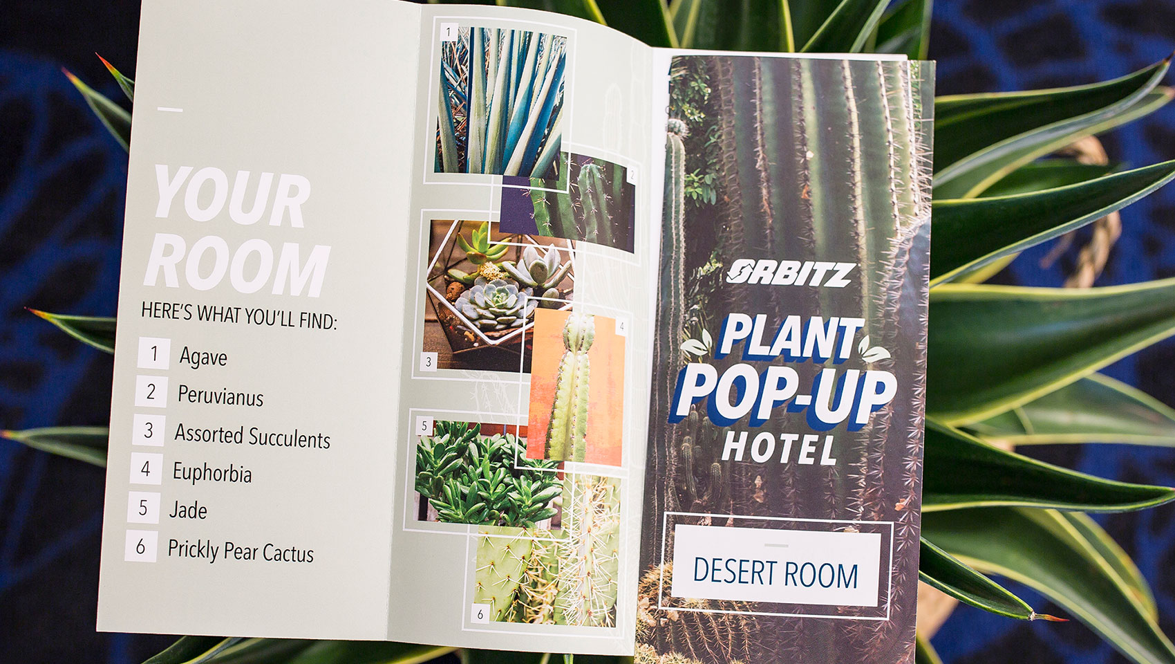 brochure describing plant varieties in room