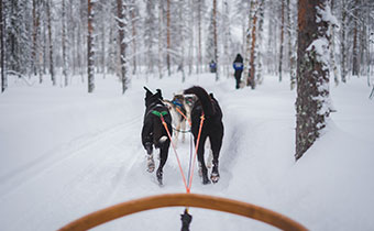 dogs pulling a sled in the snow