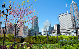 Maggie Daley Park